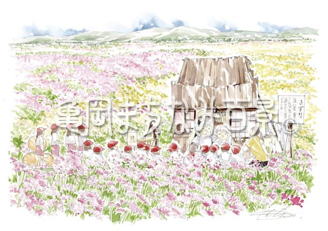 061 京都丹波 亀岡『夢コスモス園』