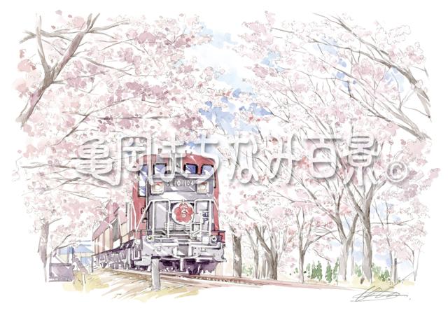 064 春に現れる九つ目の「桜のトンネル」